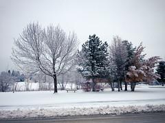 { winter } (Web-Betty) Tags: winter snow cold colorado denver co ilovebaretrees