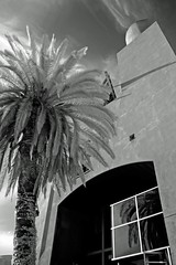 Palm Tree IR (todaniell) Tags: photoshop nikon sandiego sd palmtree infrared nik p7000 todaniell odaniell tomodaniellcom