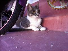 Petry 58 (Asociacin Defensa Felina de Sevilla) Tags: espaa sevilla gatos felinos animales gatitos adoptar protectora adopciones apadrinar gatosurbanos defensafelina asociacindeanimales coloniasdegatos proteccindegatos activismoporlosanimales