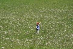 par l ! (leblondin) Tags: nature kid child prairie enfant champ pissenlis