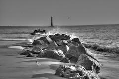 Lighthouse Rocks Spray Gull