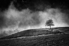 Misty Morning In Sapa (Simone Della Fornace) Tags: morning blackandwhite bw white mist black mountains tree monochrome grass misty fog clouds rural landscape asian countryside blackwhite asia vietnamese outdoor farm country ngc foggy bn vietnam fields lonely southeast agriculture bianco nero sapa biancoenero phangxipang fotoamoremio