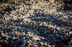 20150721-_DSC4893 (daniel.goetsch) Tags: shadow white black nature pebbles