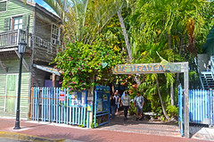 Blue Heaven (tacosnachosburritos) Tags: fl florida key west blue heaven restaurant bar music social gathering brunch tiki cafe outdoor humanity people man guy woman girl chick lady food band trees tropical tropics island