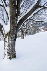 IMGP5738 (laurec.) Tags: luge neige oppenau
