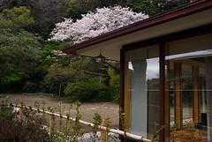 喜多川の壁紙プレビュー