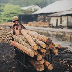 I enjoy my work (Azizi Sulaiman) Tags: wood happy workers enjoy kayu pekerja perak kualasepetang arang kilang