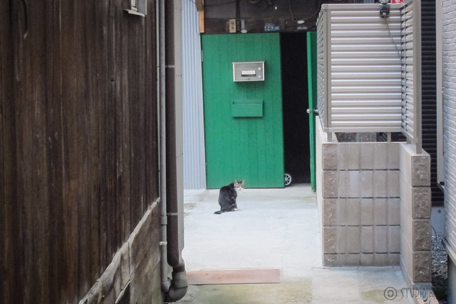 Today's Cat@2013-07-18