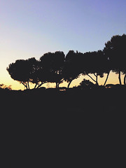sunset italy rome tree vintage landscape appleaperture... (Photo: lorenzoviolone on Flickr)
