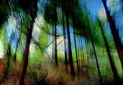 impressioni  sul  paesaggio (gpaolini50) Tags: natura explore emotive paesaggio emozioni explored esplora mygearandme