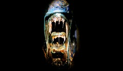 Alien (Rich Byham) Tags: film 35mm mouth movie nikon teeth alien 18g d7000