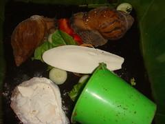 tiger snails (old ernie) Tags: giant adult african tiger snails