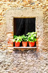 7 (Mary Frijia) Tags: italy green window 50mm nikon south traditions calabria basilico prezzemolo curinga d3100