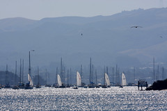 Boats on Sparkling Water (tinyfroglet) Tags: california mountain bird boats coast sails sparkle morrobay mast sailboats