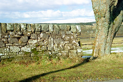 Muirkirk Landscape
