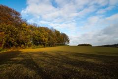 Licht und Schatten / Light and shadow (Wolkenschieber) Tags: panorama landscape deutschland laub herbst wolken landschaft sonne schatten nordrheinwestfalen hckelhoven