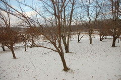 "1-Acre Mixed Orchard in Winter <a style=""margin-left:10px; font-size:0.8em;"" href=""http://www.flickr.com/photos/91915217@N00/11283272123/"" target=""_blank"">@flickr</a>"