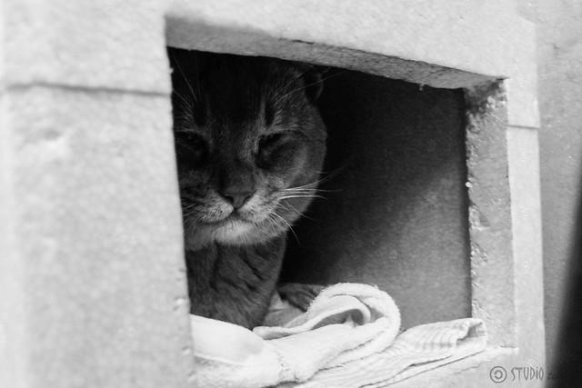 Today's Cat@2013-12-13