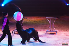 Cirque Pinder 2014-43 (Christian Picard) Tags: en elephant paris france sol french temple photo yahoo google nikon photographie image expression cuba lion images christian le clowns cirque acrobate picard naturelle otarie photographe 2014 savigny pinder lumire d90 edelstein frdric 2013 soldecuba 77176 lexpression valri frdricedelstein cirquepinder201434 loionne