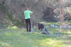 Planting CA blackberry (Weeding Wild Suburbia) Tags: spnp