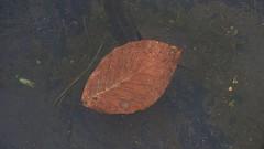 1825 In the water (Nebojsa Mladjenovic) Tags: light mist france art water digital french outdoors lumix leaf frankreich eau burgundy panasonic frankrijk minimalism francia minimalist francais fz50 svetlost mladjenovic