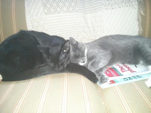 El Bandito and Foxy