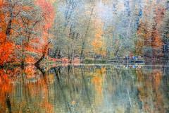 Autumn colours (Nejdet Duzen) Tags: trip travel autumn lake nature forest turkey colours trkiye bolu gl orman turkei sonbahar seyahat doa yedigller renkler reflectionyansma