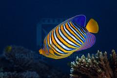 2013 12 BARATHIEU Mayotte 3255