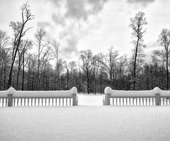 Winter's Grip (Michael Neil O'Donnell) Tags: trees winter snow deck railing