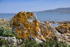 Lichen on rocks (Franco & Lia) Tags: sardegna seascape rocks mare sardinia 1750 lichen tamron rocce licheni santeodoro mygearandme miriacheddu