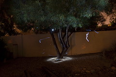 Light Tree 5 (MPnormaleye) Tags: trees light stone wall night rocks masonry atmosphere eerie foliage textures fantasy utata lighttrails effect ambience gravel 18mm