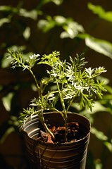 Anglų lietuvių žodynas. Žodis division magnoliophyta reiškia skyrius magnoliophyta lietuviškai.