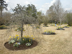 garden and lawn (Just Back) Tags: sky plants tree grass garden fun spring view circles lawn saturday daffodil growing relaxed viola horticulture planted cultivated