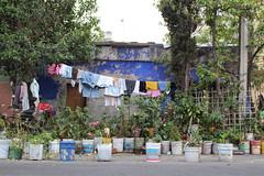 Of poverty & plants (manuelvaladezacua) Tags: poverty plants azul de botes casa plantas federal ropa pintura pobreza colgada distrito azcapotzalco tlatilco