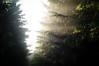 Temple forest (Jos Mecklenfeld) Tags: sunlight mist nature netherlands misty fog forest walking landscape minolta outdoor hiking wandelen walk sony hike groningen bos wald wandern terapel nex 3n westerwolde minoltaaf28f28 sonynex tempelbos laea2 sonylaea2 nex3n sonynex3n