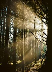 Trinidad (bior) Tags: california morning film northerncalifornia sunrise mediumformat dawn iso100 645 pentax kodak hiking trinidad redwood sunrays redwoodtrees northcoast kodakfilm ektar 75mm pentax645 redwoodforest filmphotography filmslr kodakektar 6x45cm pentax645nii 645nii kodakektar100 ektar100