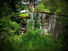 Decaying barn (SteveMather) Tags: ohio usa rotting barn wooden weeds peeling paint decay cleveland shed lawn clean foliage oh mower northeast vignette decaying topaz turkeyvulture 2015 anthropics smartphotoeditor vividhdr