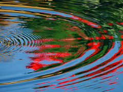 Water Art: Ripples distort geranium reflections (peggyhr) Tags: blue friends red lake canada green reflections gallery curves alberta ripples waterart distortions wonderfulphotos peggyhr bluebirdestates gr8photos angelawards artnetcontemporaryartists cubismawardgreatartisticphotographer level1photographyforrecreation thelooklevel1red thelooklevel2yellow thelooklevel3orange frameit~level01~ frameit~level02~ rainbowofnaturelevel1red artofimages~aoil1~ photographersgonewildlevel1 dsc03334a