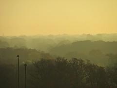 Foggy morning (debstromquist) Tags: autumn trees fall fog illinois il downersgrove treesinfog 31stst foggymornings