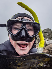 2017 Kian Fern Camel  V_ (davidmcbridephotography) Tags: labradoodle dog snorkeller swimmer camel spilt shot sea united kingdom cornwal isles scilly scillies boy wetsuit seaweed exhilerating cold freezing loade porthellick beach adventure granite awesome fun moment son pooch clear sharp nikon nauticam zen mad look crazy aqualung diver scuba happy wild scubapro typhoon hood teeth labradoodles maddog mcbride cartoon ocean muppet canine love water camera stock press setting low light overcast agent advert advertising summer winter autumn spting wonderful silly amusing