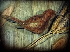 Rusty Bird (clarkcg photography) Tags: metal oxidation deterioration breakdown rust flickrfriday board grain seed texturaltuesday