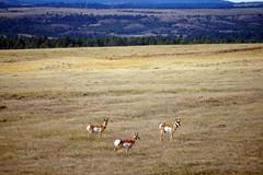 American Prairie Reserve 10
