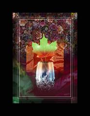 Life (mfuata) Tags: life yaşam hayat ömür doga nature flower çiçek yaprak leaf