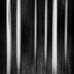 Forest Stripes (Mabry Campbell) Tags: 2013 24mm europe goteborg gothenburg göteborg halland houstonphotographer kungsbacka mabrycampbell may scandinavia sweden västragötaland abstract blackandwhite bw commercialphotography fineartphotography forest image intimatelandscape landscape monochrome panning photo photograph photographer photography squarecrop sverige trees woods f22 may272013 201305270h6a2444 05sec 100 tse24mmf35l fav10 fav20 fav30