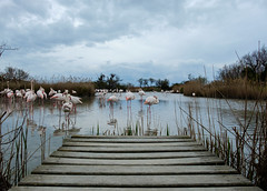 _DSF0079 (hugrem1) Tags: flamants roses flamingo parc ornithologique pont de gau arles saintes maries la mère nuages clouds fuji fujifilm xt1 xf 18135 landscape paysage ponton pontoon