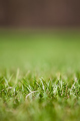Shallow (johnofarch14) Tags: plants green nature colors grass relax photography nikon colorful bokeh outdoor sigma ps fresh depthoffield shallow dslr depth 70200mm d90 bussewoods johnofarch14