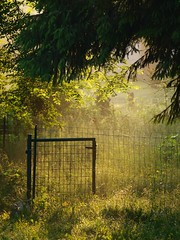 Derrière le portillon ***-* ° (Titole) Tags: morning light grass fence sapin herbe wirefence wirenetting portillon favescontestwinner friendlychallenges thechallengefactory storybookwinner titole nicolefaton