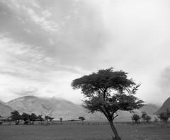 Hunder - Nubra (4thBlock) Tags: white black mamiya home contrast high developer zanskar epson v600 developed ladakh ansco rb67 65mm