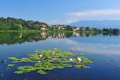 riflessi (Paolo.S - Fotografie) Tags: italy lago acqua varese colline riflesso ninfea