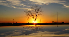Sunset Silhouette (1suncityboi) Tags: